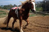 Vaulting Horse 2