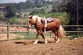 Vaulting Horse 3