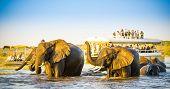 Постер, плакат: African Elephant Safari