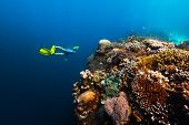 Freediver swims underwater near the vivid coral reef with colorful corals and schools of fish. Phili poster