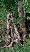 Wild birds of Thailand, Fish Hunters.