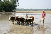 Farmers Plowing Agricultural Field