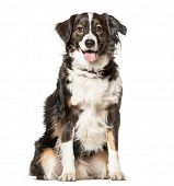 Mixed-breed dog , 5 years old, sitting against white background poster