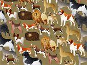 Pedigree Dog Wallpaper