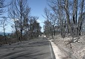 Burned Forest And Road
