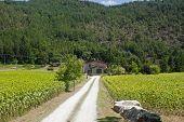 Country House Near Arezzo (tuscany, Italy) At Summer