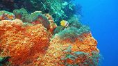 Fish And Coral Reef. Tropical Fish On A Coral Reef. Wonderful And Beautiful Underwater World With Co poster