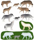 Collection Of Different Species Of Wolves And Wolf-cubs poster
