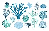 Bundle Of Various Corals And Seaweed Or Algae Isolated On White Background. Set Of Blue And Green Un poster