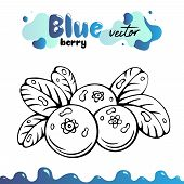Blueberry Vector Illustration, Berries Images. Isolated Blueberry Vector Illustration For Menu, Pack poster