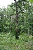 Abandoned Deer Stand