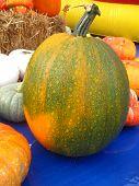 big green pumpkin in front of other pumpkins