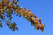 Fruit Branch