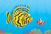 Scorpion-fish and anemonefish