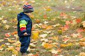 Cute Boy And Falling Leaves