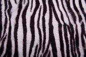 Striped Animal Fur Background
