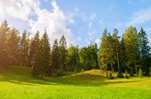 Forest Summer Landscape - Dense Forest Trees In The Valley In Sunny Summer Weather. Dense Forest Tre poster