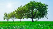 Panoramic View Of Trees In A Field. Generation Growth Legacy Family Concept poster