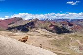 View Of Rainbow Mountains Of Peru. Peruvian Andes. Ausangate Mountain. In The Foreground Sits An Eag poster