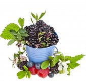 Tasty bramble dewberry berries with flower bloom isolated on white background