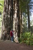 Visiting The Redwoods, California.