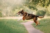 Happy Mixed Breed Dog Running Outdoors In A Collar With Gps Tracker poster