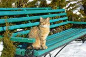 Stray Cat Sitting On Wooden Bench. Homeless Lost Cat In Cold Winter. poster