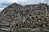 The Firewood In The Warehouse Is Delivered To Customers Who Are Heated In The Winter For Firewood. poster