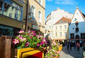 Sunny Old Town Street View, Flowers By Restaurant, People Sightseeing, Tallinn, Estonia poster