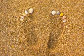 Seashell Footprints On The Beach. Footprints In The Sand. Foot Marks On The Sand Beach With The Seas poster