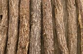 Liquorice Root Lying On A Wooden Surface