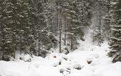 Winter landscape, snowy winter trees. Winter snowy day scene. Monochromatic winter background, panor poster