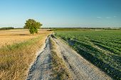 A Long Dirt Road Through Fields, Lonely Tree And Blue Sky poster