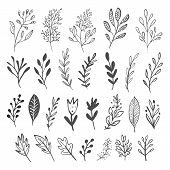 Vector Collection Of Hand Drawn Flowers.hand Drawn Monochrome Flowers. poster