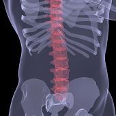 X-ray of the human spine