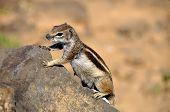 Cute Squirrel  On A Rock