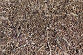 Million  Red Ants