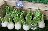 Fennel Bulbs.