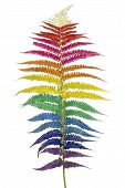 picture of psychodelic  - Fern leaf colored in psychodelic colors of a rainbow flag of homosexuals - JPG