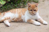 Cute Brown Cat On The Floor