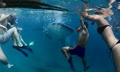 stock photo of cebu  - Group of people snorkeling with whale shark - JPG