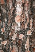 Natural Wood Bark On A Tree poster