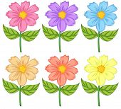 stock photo of six-petaled  - Illustration of the six colorful flowers on a white background - JPG