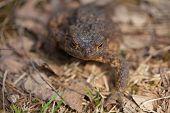 Toad Macro