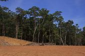 Deforestation of Borneo rain forest for oil palm plantations