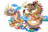 Постер, плакат: The Dragon on white background