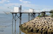 stock photo of flounder  - flounder fishing on the coast of Charente Maritime - JPG
