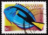 Postage Stamp South Africa 2000 Palette Surgeonfish, Marine Fish