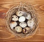 foto of quail egg  - Quail eggs nest over wooden table background - JPG