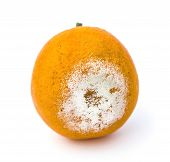 Close Up Of Rotten Orange On A White Background